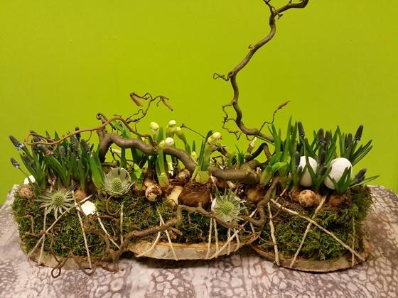 Easter muscari - €21,90